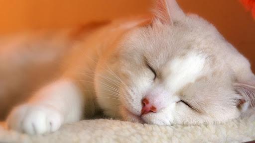 Ngủ ngon nhé