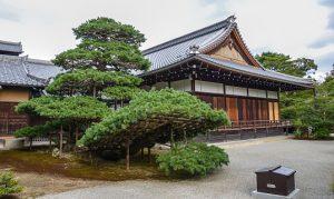 3 nét độc đáo của văn hoá trà đạo Nhật Bản