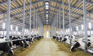 Đơn hàng làm sữa bò đi tỉnh HOKKAIDO tháng 3. 2021