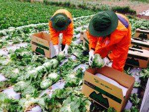 Đơn hàng nông nghiệp Nhật Bản
